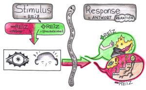 Coaching Card Stimulus-Response